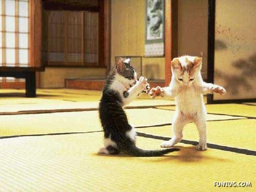Cute Cats Story
