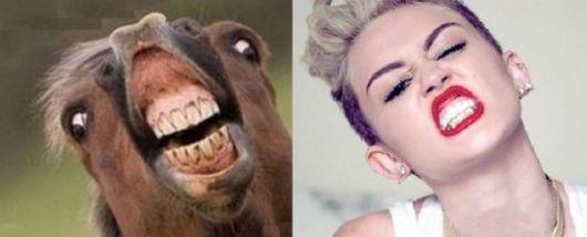 Horses That Look Like Miley Cyrus