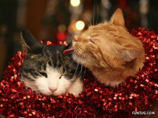 The Jingling Spirit of Christmas