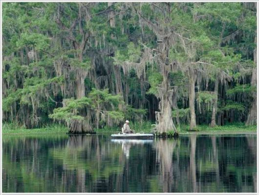 Incredible Artistic Cypress Caddo Lake