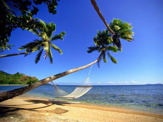The Beautiful Beach Trees