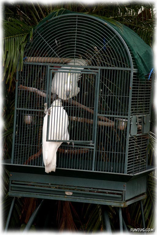 A Love Tale of Two Cockatoos