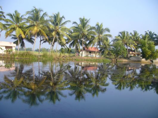 Beautiful Backwaters Of Kerala, India