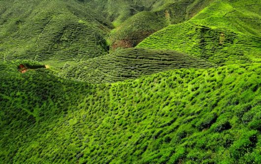 Terrific Tea Plantations Around The World