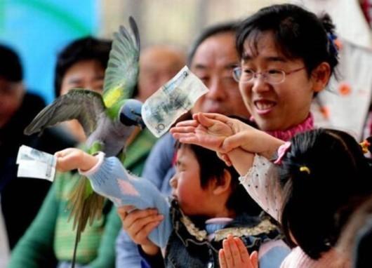 Birds Olympics In China