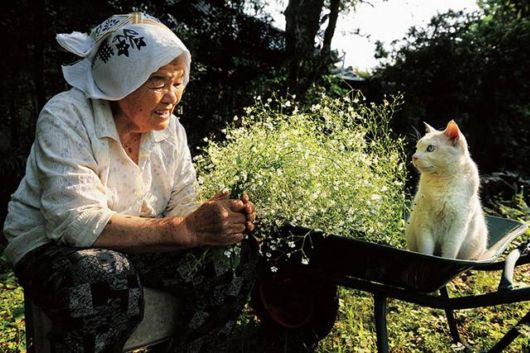 A Granny And Her Odd Eyed Cat