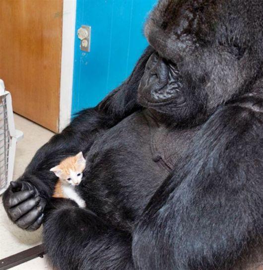Most Unusual Animals Adoptions