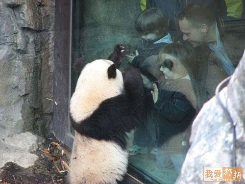 Enjoy The Panda Therapy