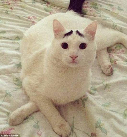 A Funny Cat With Eyebrows