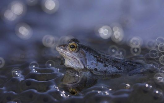 Magical Miniature World Of Frogs