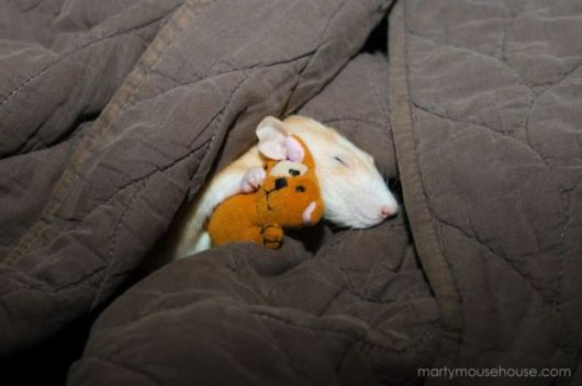 This Playful Photo Series Will Change Your View On Rats