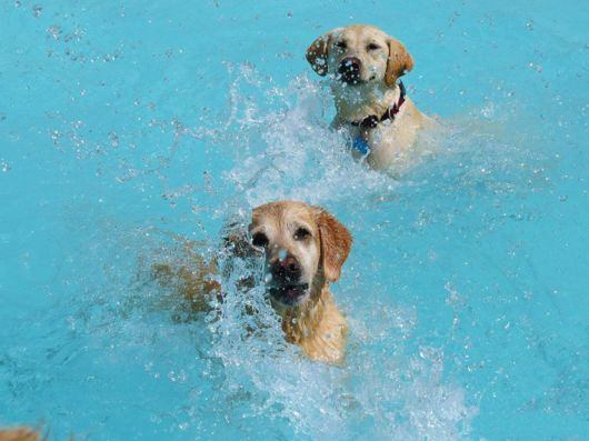 'Pool Pawty' At A Dog Daycare Center