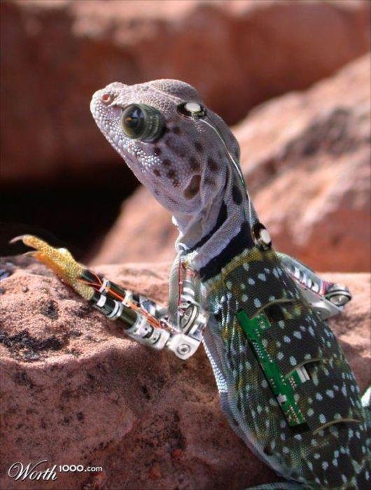 Cool Robotic Animals